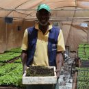 A farmer in Senegal tests methods of agroecology on the resilience of crops. Credit: FAO.